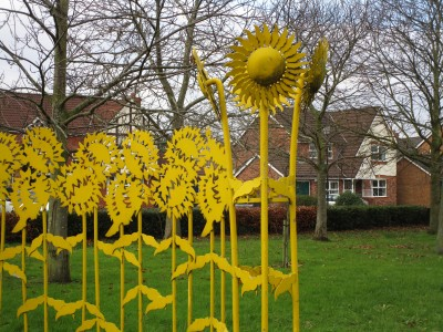 Sandymoor Sunflowers